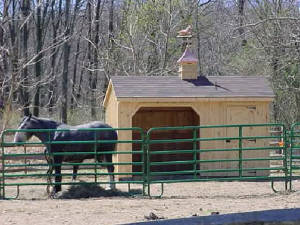 Image of Horse In Gated Wooden Horse Stalls Fleetwood, PA  - Eastern Building Products